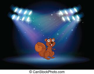 palcoscenico, scoiattolo, riflettori