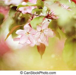 Pale pink flowers of Apple tree