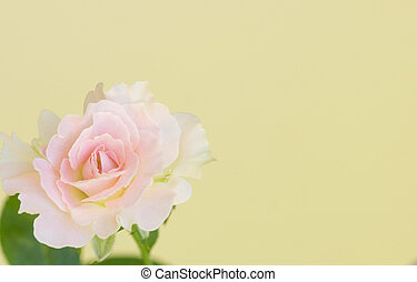 Pale pink rose with yellow background