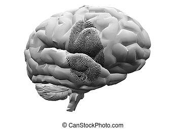 palec odcisk, na, mózg