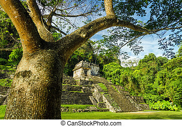 Palenque Tree and Temple - A temple in the ruined Mayan city...