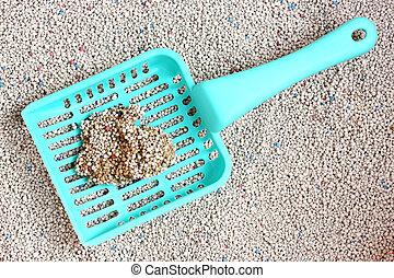 paletta, figliata, gatto sabbia
