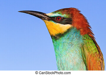palette of bright colors in the feathers of a bird