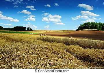 palha, campo, fardos, paisagem, colhido
