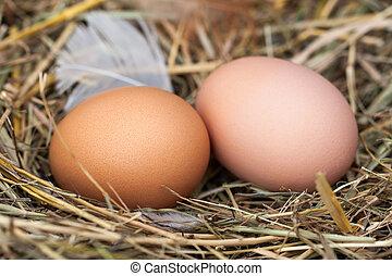 palha, ninho, dois, ovos galinha, mentindo