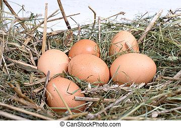 palha, ovos, seis