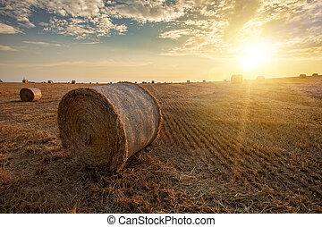 palha, verão, colhido, fardos, campo