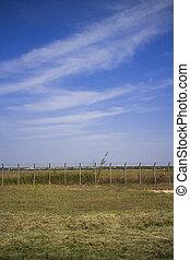 Palisade grass sky
