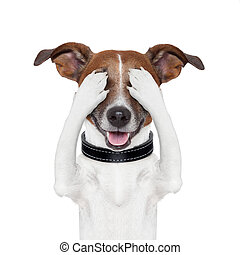 paliza, cubierta, ojo, perro