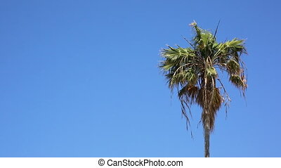 Palm against sky background