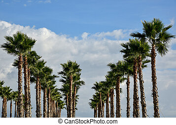 Palm Alley in Sochi