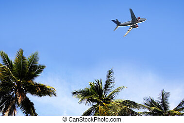 palm and airplane