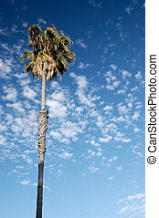 Palm and clouds - A palm on the background of the blue sky ...