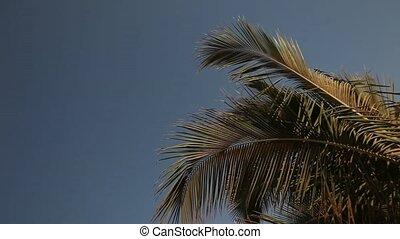 Palm at Ocean