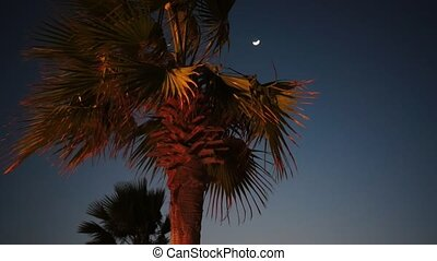 Palm at the night and moon on the background.