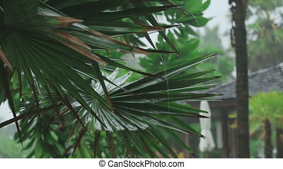 Palm at tropical downpour