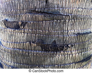 Palm Bark Peeled Off Texture