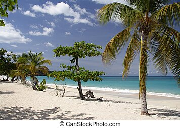Palm Beach - Beautiful caribbean beach