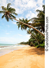 palm beach of Sri Lanka