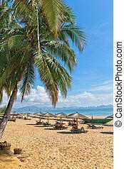 palm beach sea