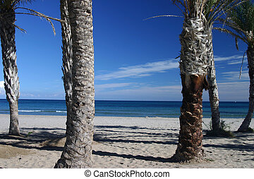 palm beach - view of tropical beach through the palm trees...