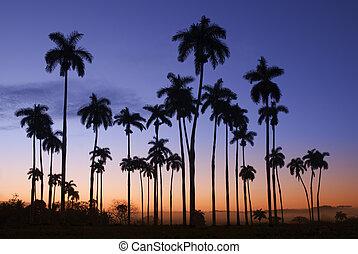 Palm - Beautiful backlight palm trees landscape in Cuba
