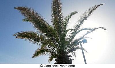 Palm blue sky summer