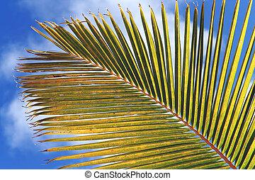 Palm branch detail - Palm branch closeup. Image taken at the...