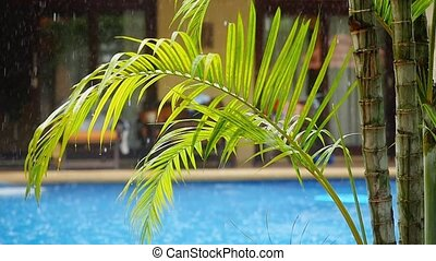 Palm branch on the water pool in the rain. Slow motion.