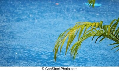 Palm branch on the water pool in the rain. Slow motion....