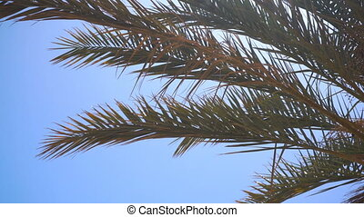 palm branches amid the Sun and blue sky bungalow close-up -...
