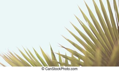 Palm branches crouch in the wind in the daytime. - Palm...
