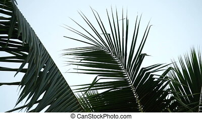 Palm branches. Plant.