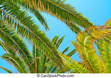 palm branches under a clear sky
