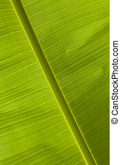 palm, close-up, blad