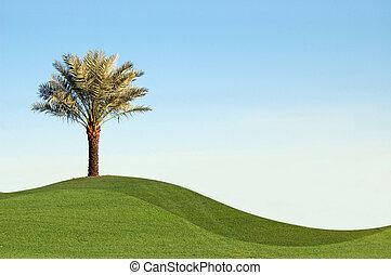 Palm dates - Palm tree with green bermuda