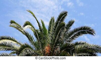 Palm leaf and blue sky, full HD video