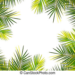 palm frame on white