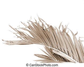 Palm Frond - Sepia Toned Sunday Palm