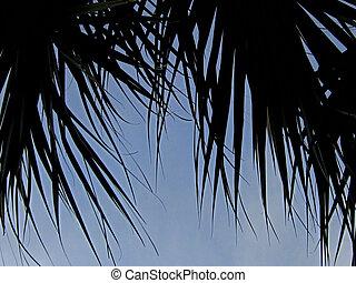 Palm fronds against blue sky
