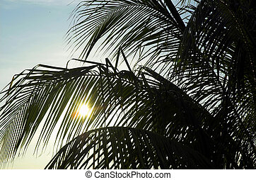 Palm fronds at sunset on tropical beach at Varadero Cuba.