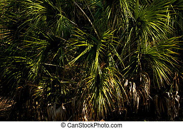Palm fronds - close up of green palm tree fronds filling...
