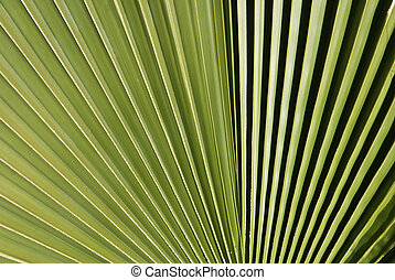 Palm Fronds  - Close up of palm fronds in light and dark