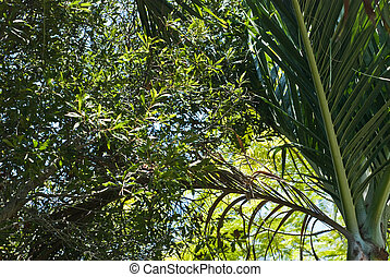 Palm Fronds, Florida - Palm fronds and tropical vegetation...