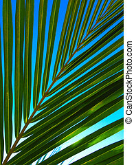 Palm Fronds - Full frame shot of the fronds of a palm tree...