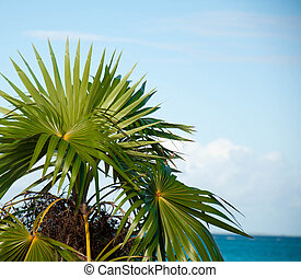 Palm Fronds - Image of colorful palm fronds against a blue...