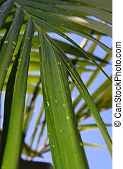 Palm Fronds - More palm fronds with water droplets on them