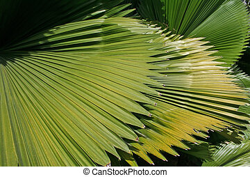 Palm fronds - Palm frond leaves closeup of leaf textures