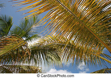 Palm fronds - Some colorful palm trees in the sun