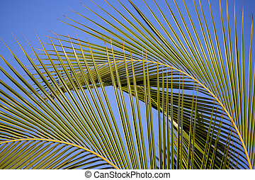 Palm Fronds - Two large palm fronds bending in the wind...